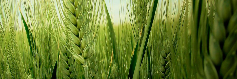 Maquinaria agrícola moderna, eficaz y duradera