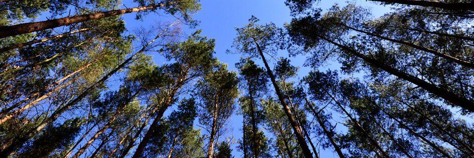 Para el cuidado y mantenimiento de los bosques